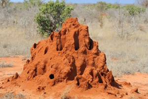 Une termitière via Shutterstock
