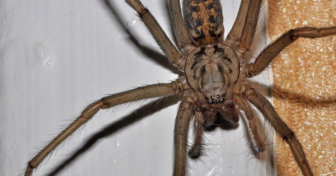 Est ce vraiment judicieux de jeter les araign es de votre for Araigne sauteuse maison