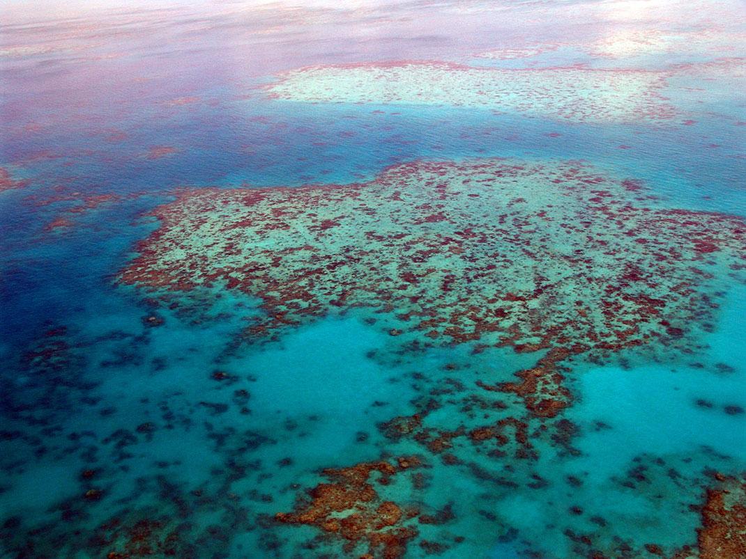 Le récif corallien mesure sept fois et demie la taille de New York