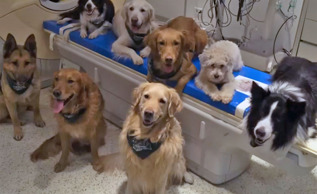 Des chiens pour l'expérience d'IRMf