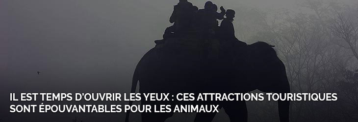 5-animaux-attractions
