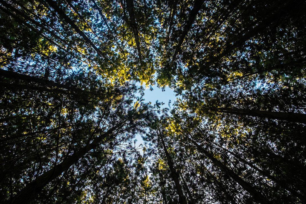 Cette réussite est très encourageante pour la reforestation planétaire