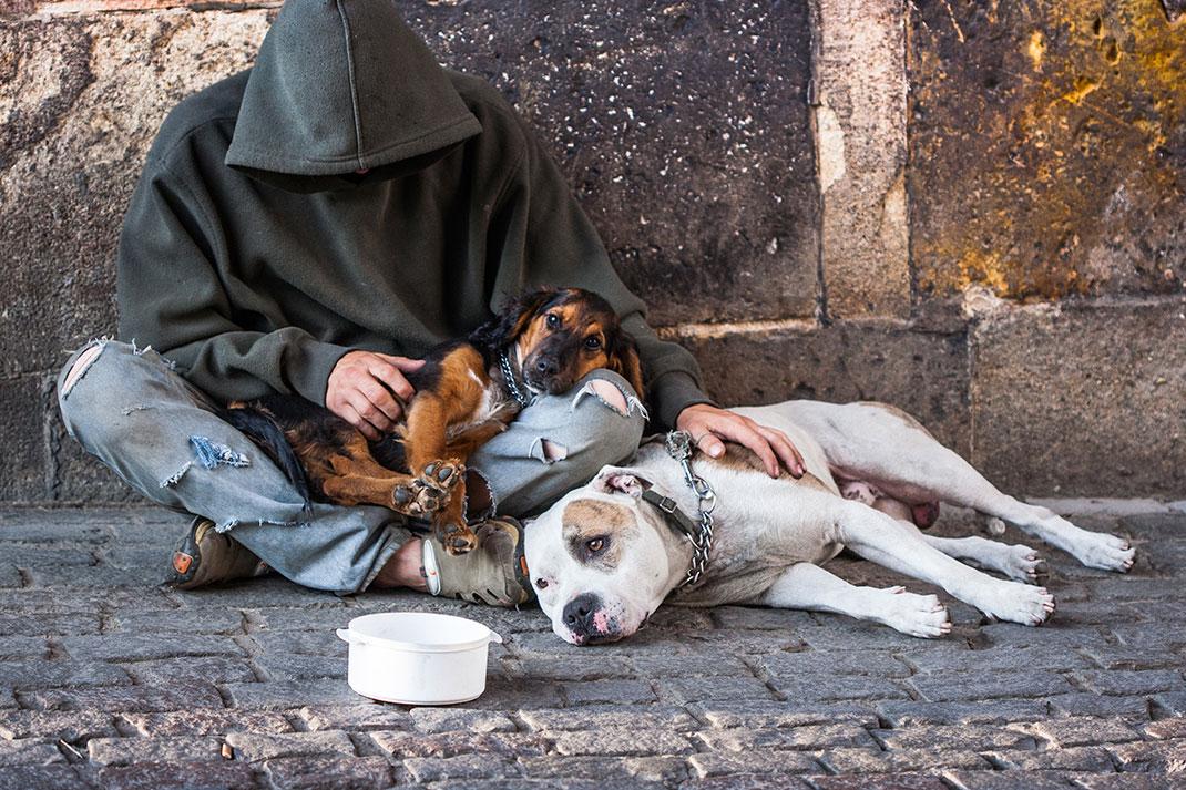 Un sans-abri fait la manche accompagné de ses deux chiens via Shutterstock
