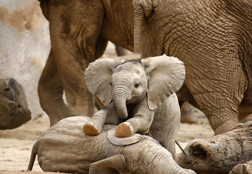 bebe-elephants
