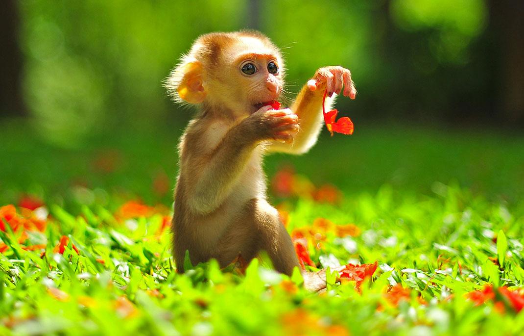 Un bébé macaque en Thaïlande via Shutterstock