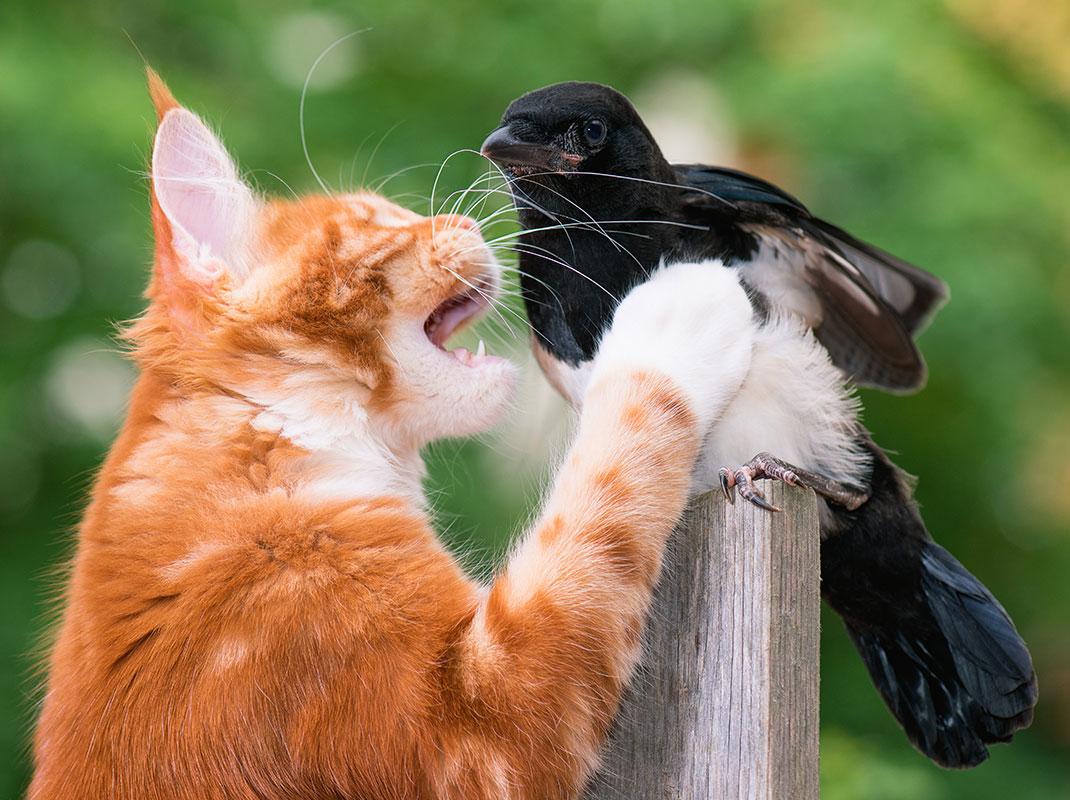 Un chat s'apprête à attraper un oiseau via Shutterstock