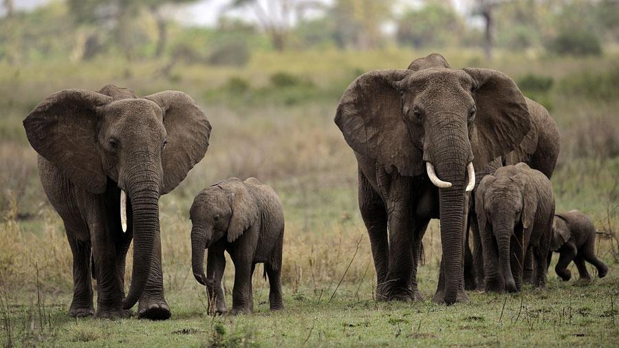 elephants-troupeau