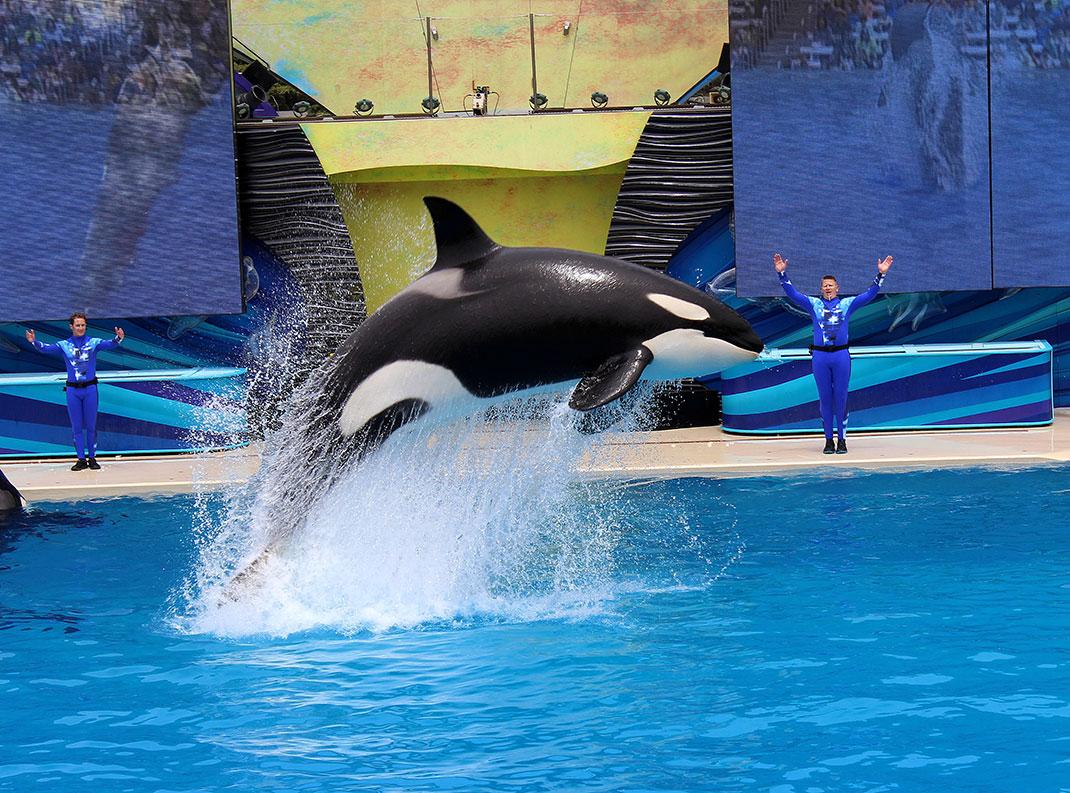 Ces représentations sont un enfer pour les orques via Shutterstock
