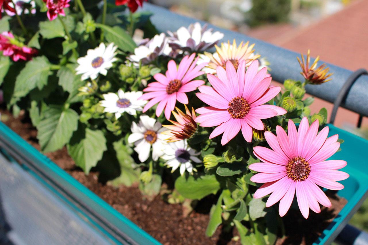 Fleurs en pot sur le balcon