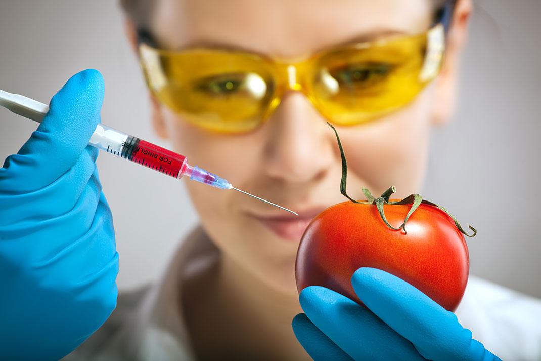 Manipulation génétique d'une tomate via Shutterstock