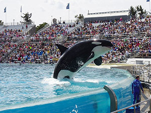 orque-captivite