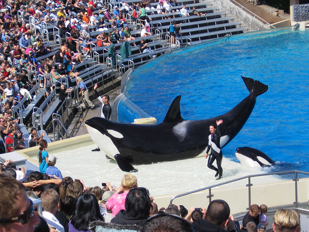 orque-spectacle