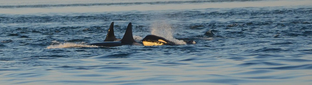 orques-liberte