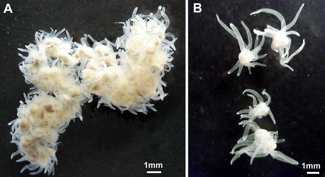 Des polypes