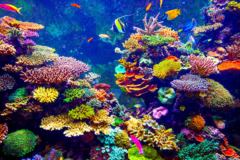Des coraux via Shutterstock