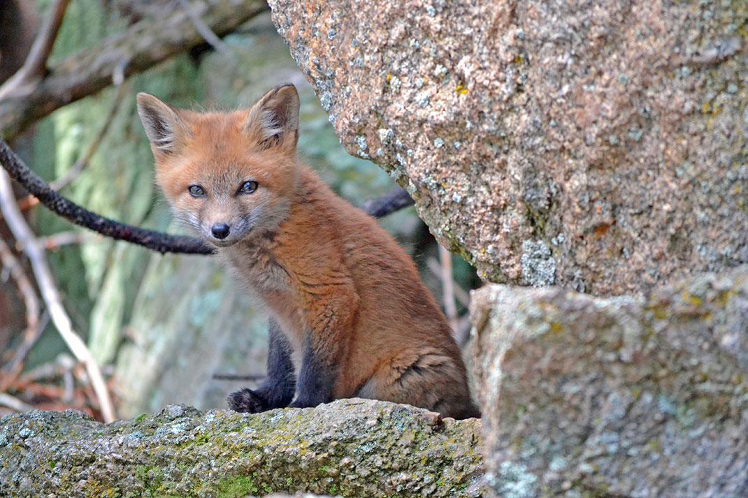 Chasser autant cet animal risque de mettre des écosystèmes entiers en danger
