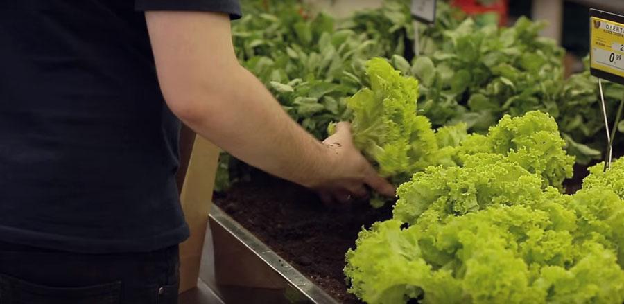 supermarche-legumes-salade
