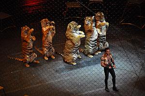 tigres-cirque