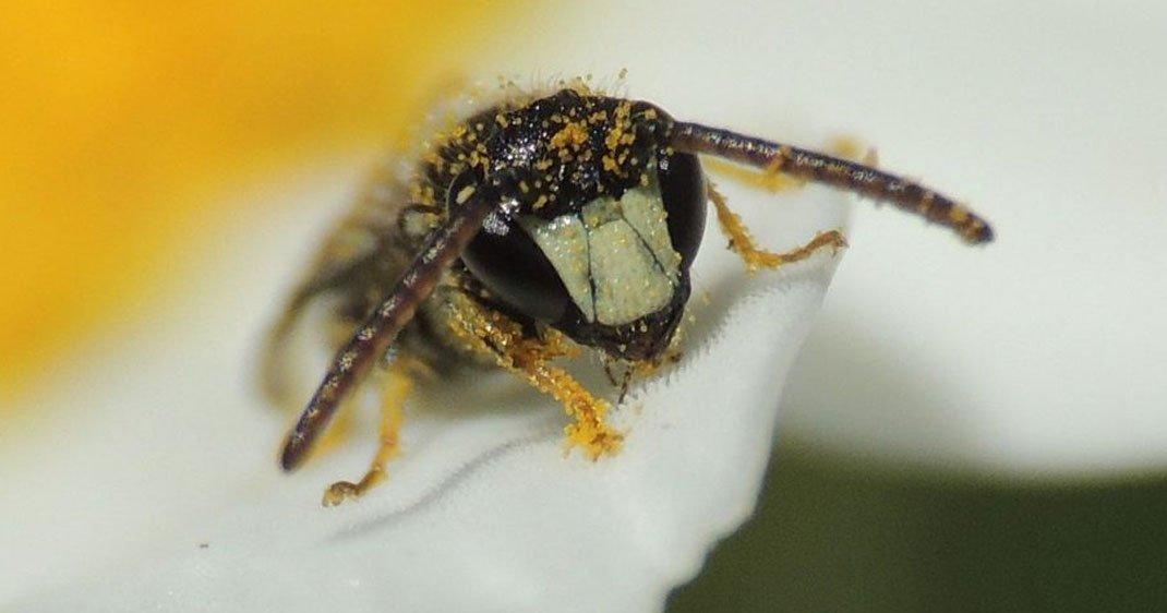 abeille-disparition-une