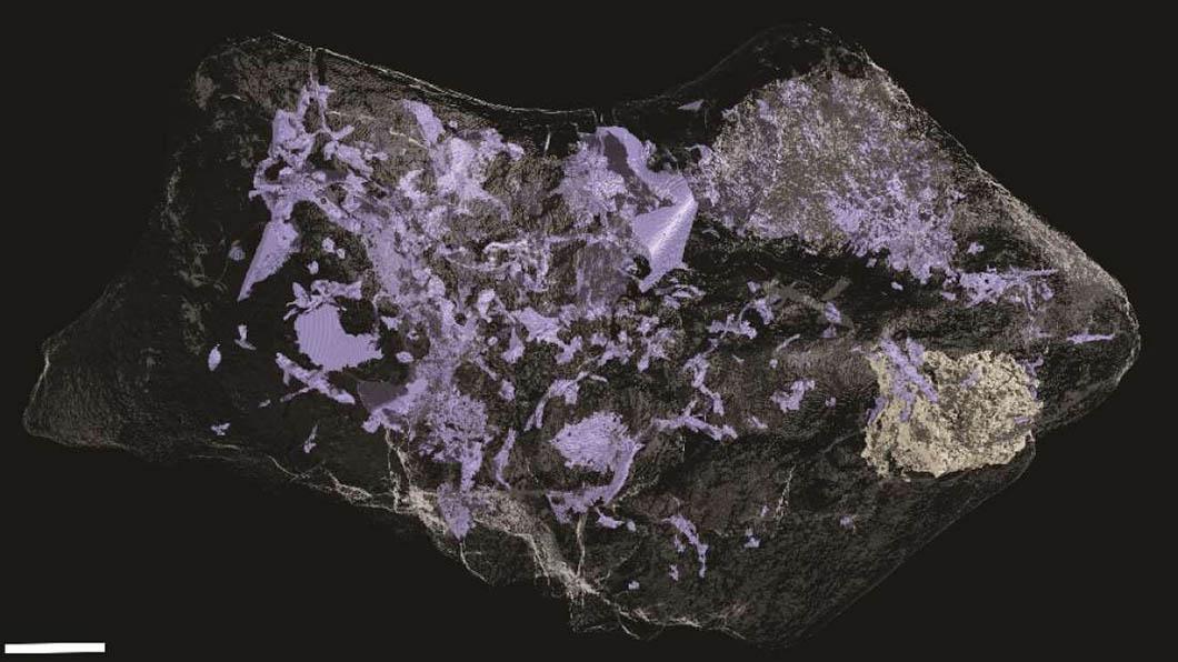 Un scanner détaillé du cerveau a révélé que de nombreuses petites structures complexes ont également été préservés - Université de Cambridge