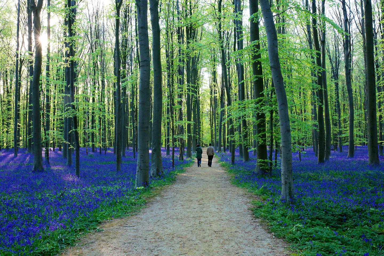 9 for ts qui vous donneront envie de communier avec la for Ou trouver du bois flotte en belgique
