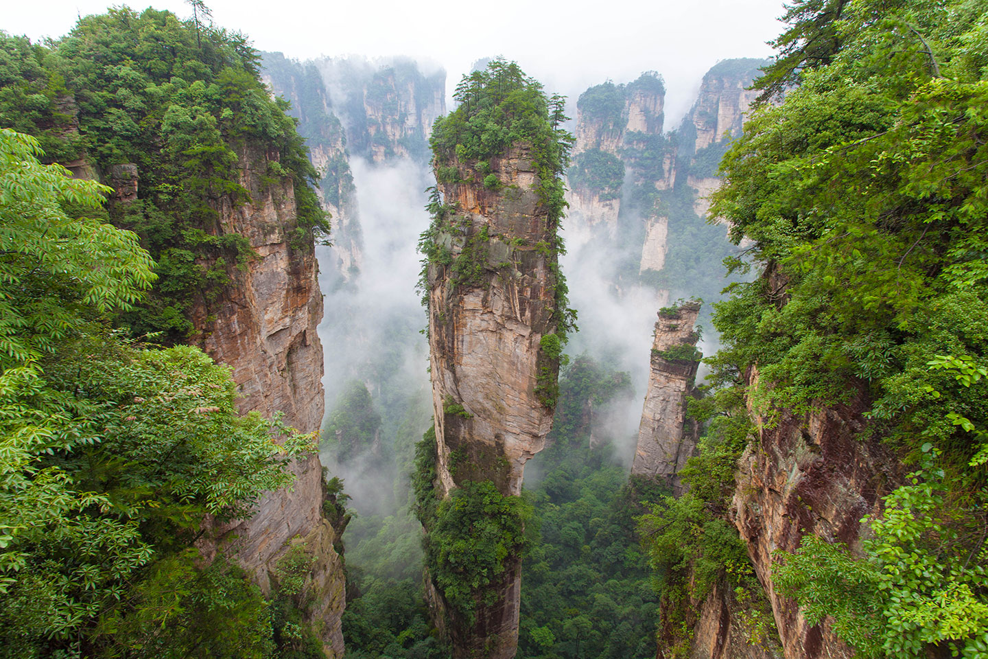 foret-chine