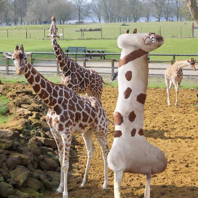 girafe-2