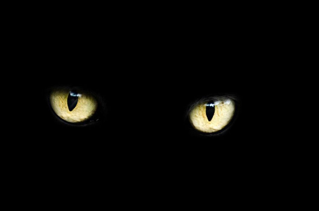 yeux_chat_noir
