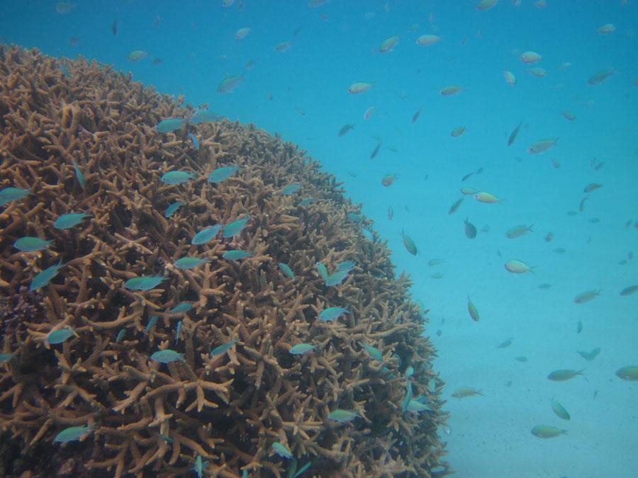 campagne-noe-corail