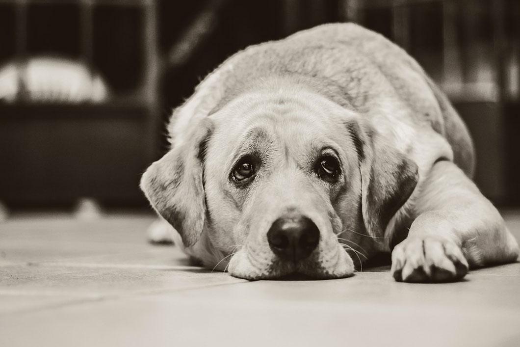 chien-triste-2