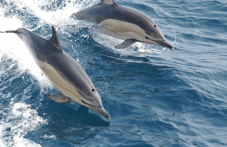 dauphins-en-mer