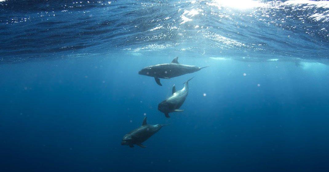 dauphins-liberes-une-3