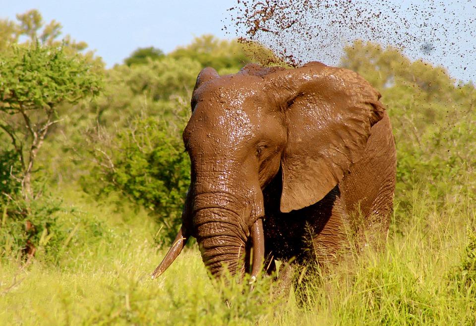 © Pixels - Éléphants