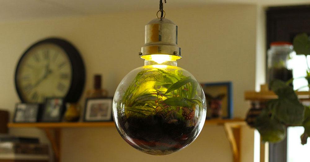 lampe-ecosysteme-4