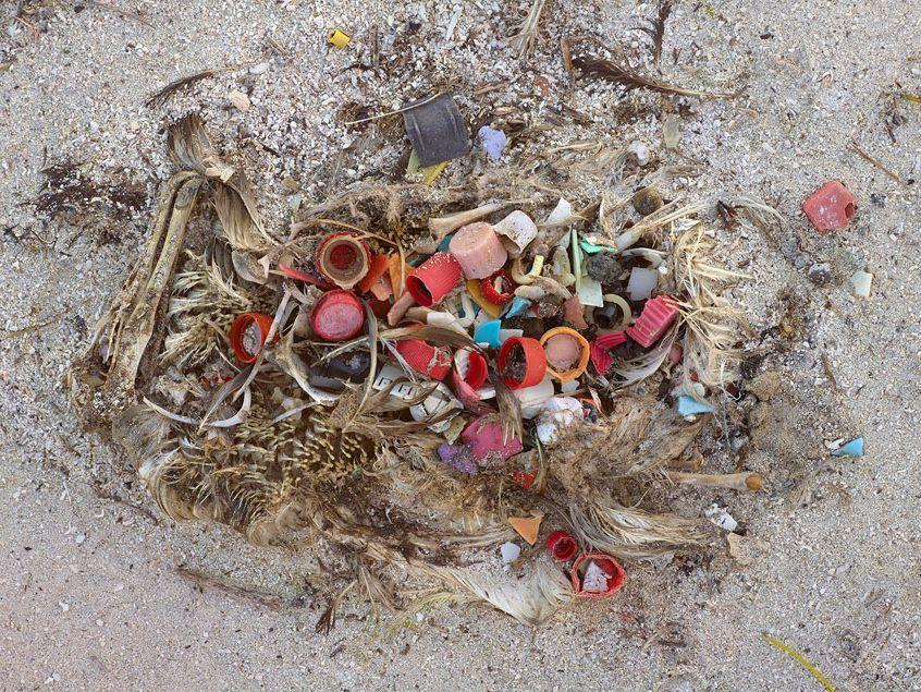 midway_albatros_pollution_plastique_3