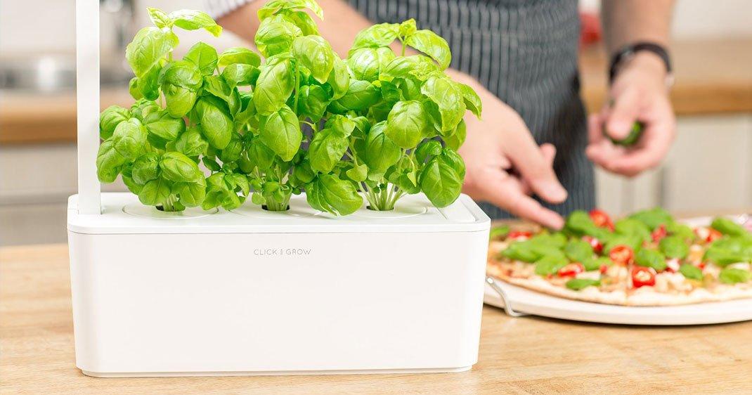 plant-herb-garden-une