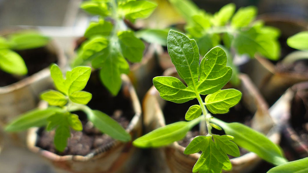 plantes-maison