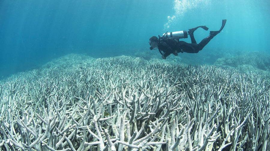 rechauffement-climatique-coraux