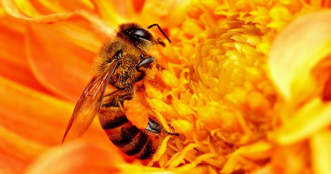 une-abeilles-quiz