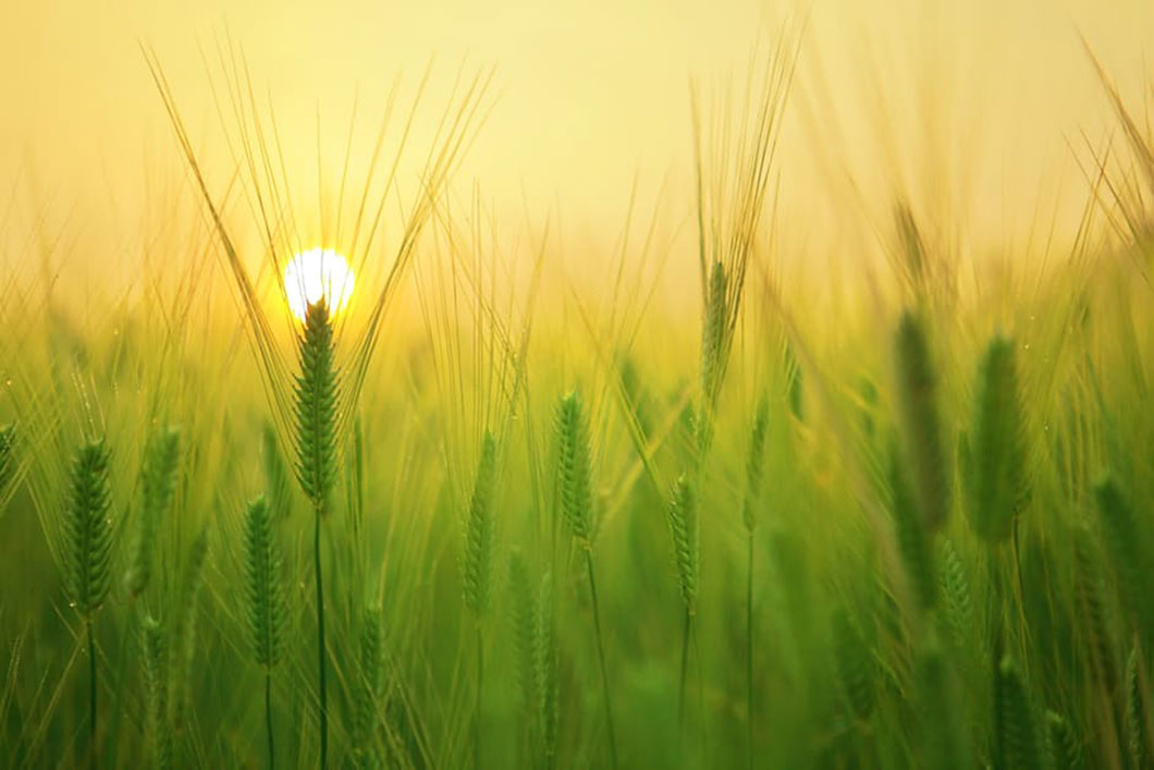 Le Beloukha ne présente aucun risque ni pour l'environnement, ni pour la santé