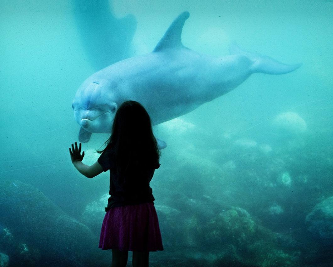 Les forts taux de mercure menacent la santé des dauphins comme celle des hommes
