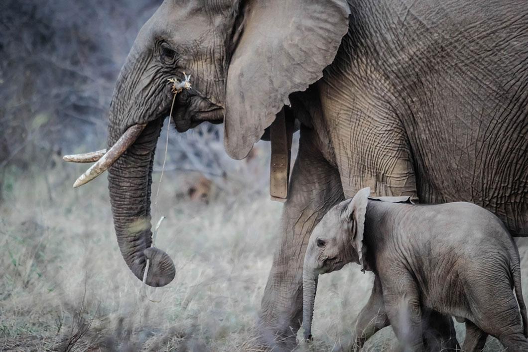 elephant-bebe