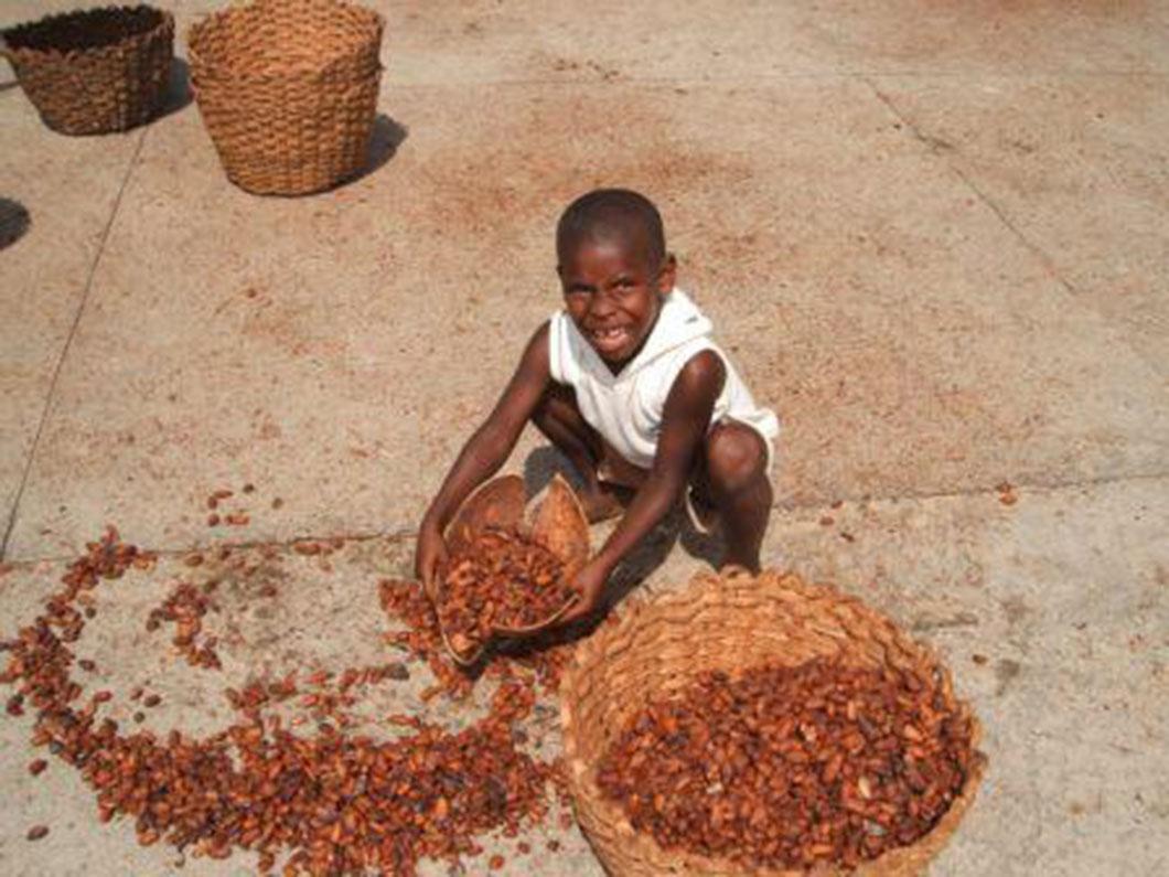 Plus de 2 millions d'enfants seraient exploités dans les plantations de cacao selon le BASIC
