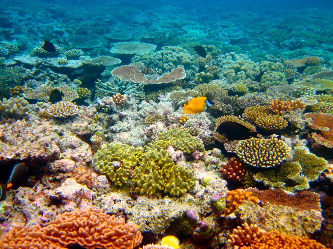 La construction de la mine de charbon d'Adani dans le Queensland menace la Grande barrière de corail