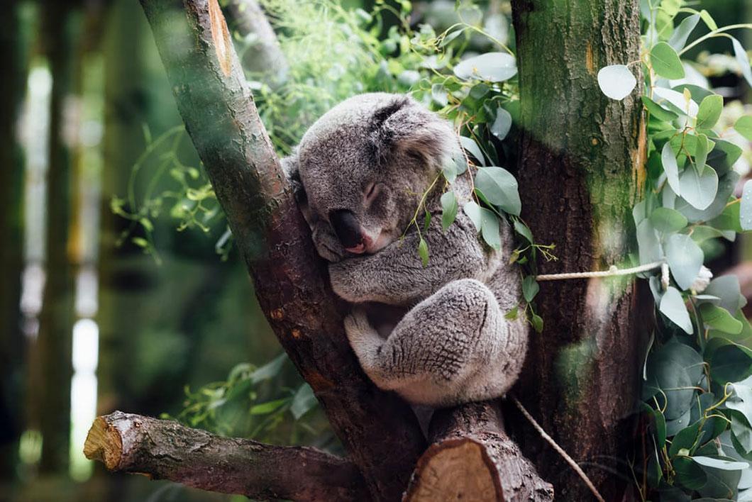 koala-repos