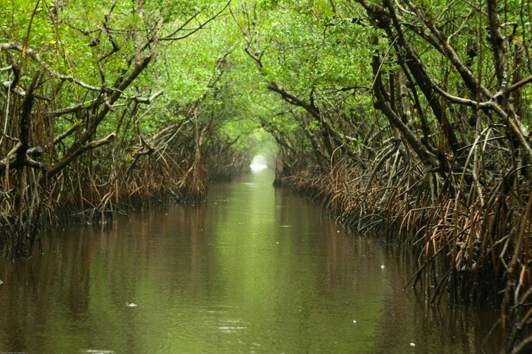 Les Everglades sont propices à l'accumulation du mercure