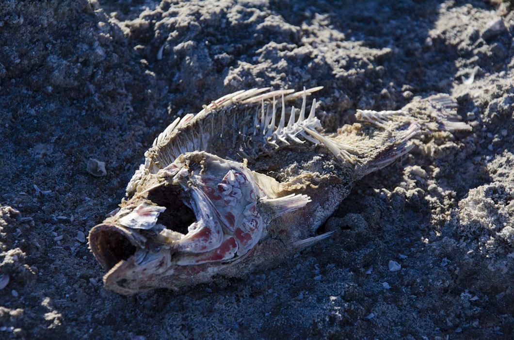 poisson-mort