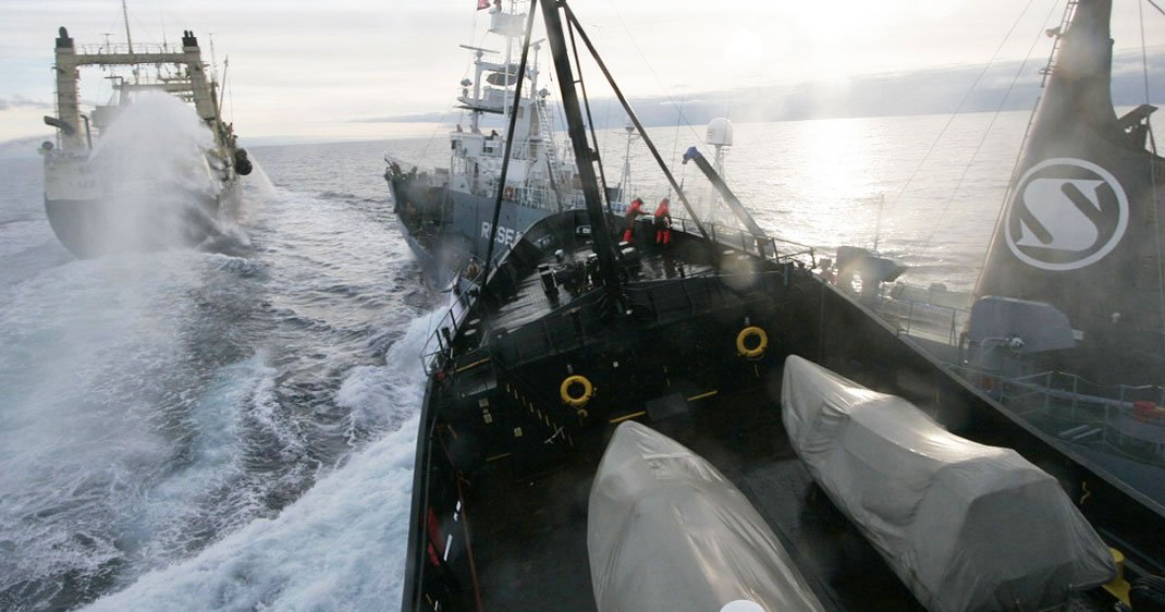 sea-shepherd-traque-braconniers-une