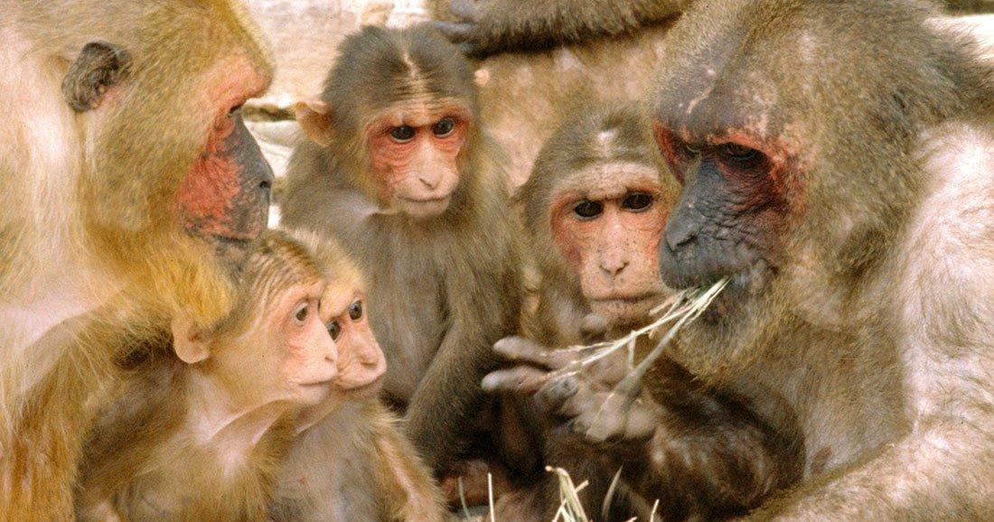 une-macaques-parole
