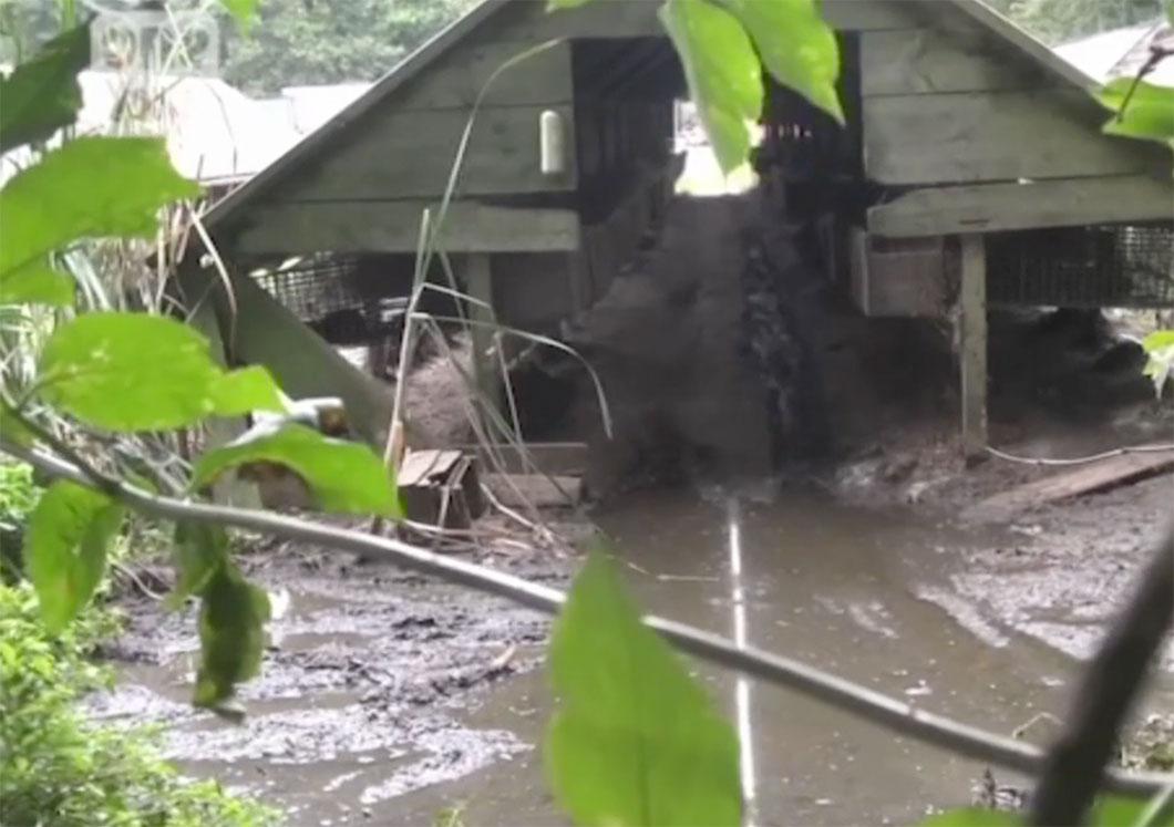 Les visons vivent dans des conditions déplorables...
